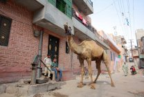 Street scenes, Jodhpur, India — Stock Photo