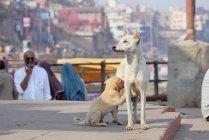 Mama-Hund mit Welpen in Indien — Stockfoto