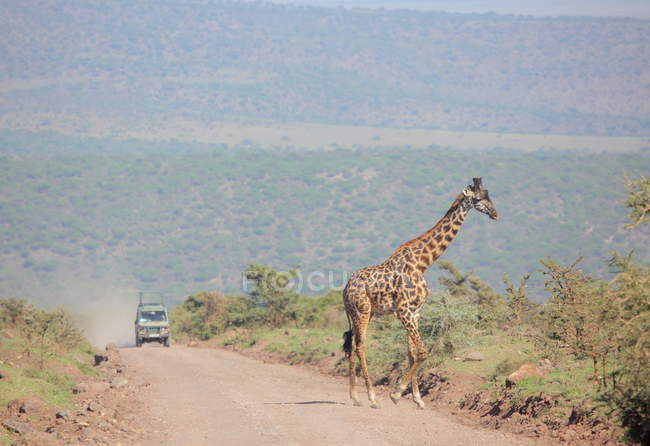 Giraffe at Etosha national park — Stock Photo