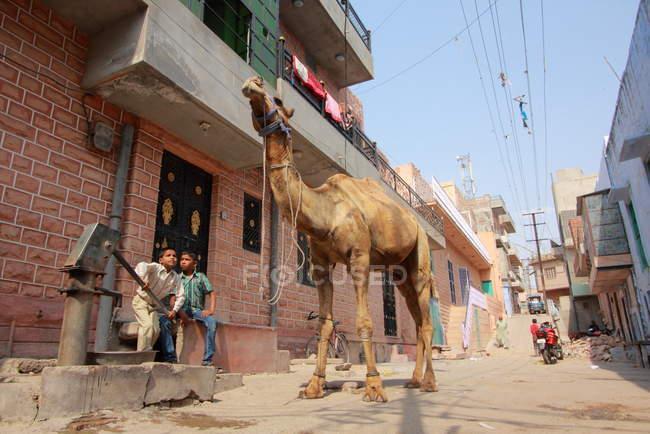 Einheimische und Kamele in Jodhpur (Indien). rajasthanischer Staat) — Stockfoto