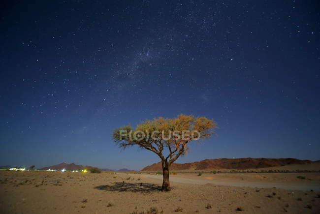Deadvlei Acacia Trees — Stock Photo
