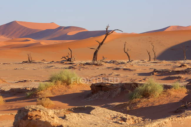 Arbres d'Acacia Deadvlei — Photo de stock