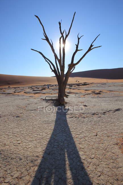 Acacia Deadvlei, parc Naukluft — Photo de stock