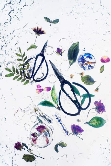 Zwei Scheren mit Pflanzen — Stockfoto