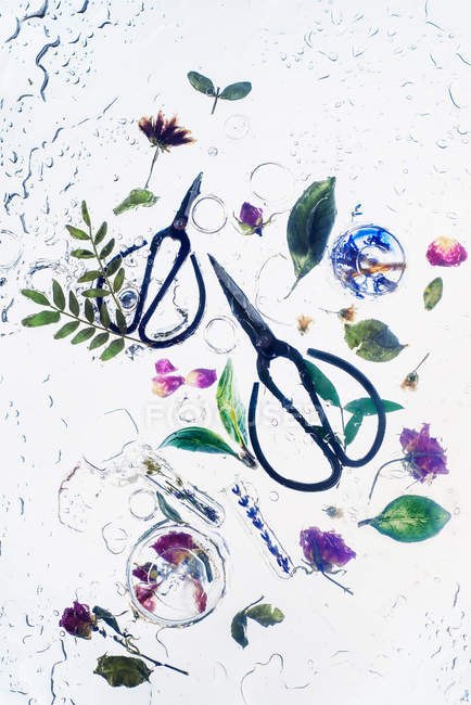 Two scissors with plants — Stock Photo