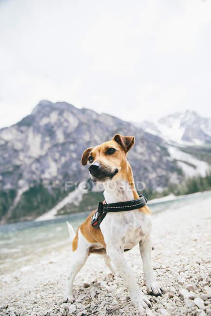 Cute little dog near mountain lake — Stock Photo