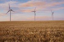 Turbinas eólicas ao anoitecer em um campo — Fotografia de Stock
