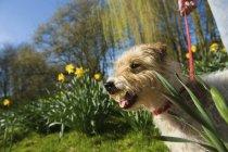 Petit chien dans un jardin — Photo de stock