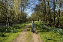 Mulher e cão caminhando através de árvores — Fotografia de Stock