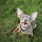 Small dog sitting on the ground — Stock Photo