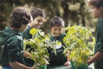 Kinder lernen über Pflanzen und Blumen — Stockfoto