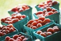 Tomates rojos de cereza ecológicos - foto de stock