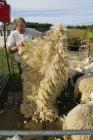 Man folding a sheep's fleece — Stock Photo