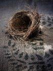 Nido del piccolo uccello intessuto — Foto stock