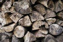 Mucchio ordinatamente impilato di tronchi — Foto stock