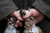 Man holding two dead partridges — Stock Photo