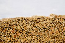 Stacks of freshly cut logs — Stock Photo