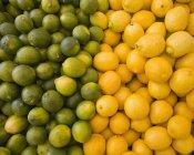 Lemons and limes, citrus fruits — Stock Photo