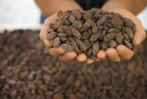 Herstellung von Bio-Schokolade — Stockfoto