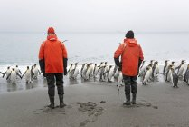 Два человека, глядя на короля пингвины — стоковое фото