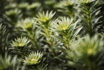 Plantas orgánicas que crecen en invernadero - foto de stock