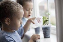 Garçon, arroser les jeunes plants — Photo de stock