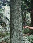Людина досягає дерево — стокове фото