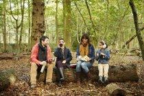 Буковый лес осенью — стоковое фото