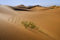 Grasses in sand dunes — Stock Photo