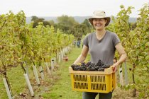 Grape picker in a wide brimmed hat — Stock Photo