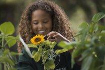 Mädchen untersuchen eine Sonnenblume Pflanze — Stockfoto