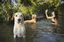 Woman swimming with two dogs in lake — Stock Photo