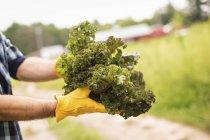 Чоловік тримає жменя свіжих овочів — стокове фото