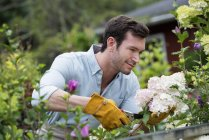 Man working, tending the plants. — Stock Photo
