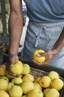 Homem embalagem maçãs frescas . — Fotografia de Stock