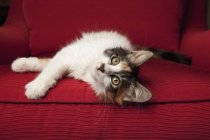 Котенок на красном диване — стоковое фото