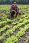 Людина в полі невеликий салат рослин — стокове фото