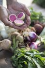 Person holding fresh root vegetables — Stock Photo