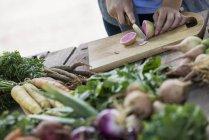 Pessoa para legumes frescos colhidos — Fotografia de Stock