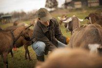 Чоловічий фермер тенденцію кіз — стокове фото