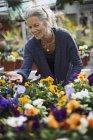 Woman working tending flowering plants — Stock Photo