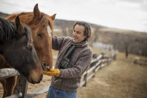 Man patting horses — Stock Photo