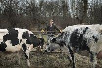 Granjero trabajando en granja y cuidado de las vacas. - foto de stock
