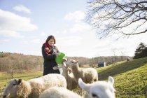 Mulher com um balde, alimentando as ovelhas — Fotografia de Stock