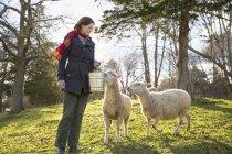 Женщина с двумя овцами . — стоковое фото