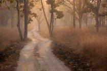 Bandhavgarh Nationalpark — Stockfoto