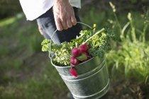 Biobauernhof auf dem Land — Stockfoto