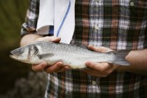 Chef tenant un poisson frais — Photo de stock