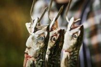 Mackerel fish hanging on hooks. — Stock Photo