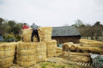 Two thatchers moving straw — Stock Photo